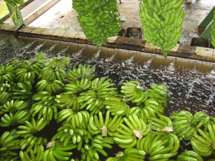 Restauration collective en plantation
